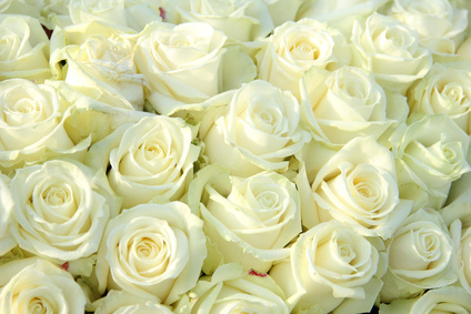 Big group of white roses, part of wedding decorations